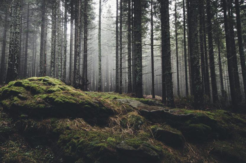 greedy forest